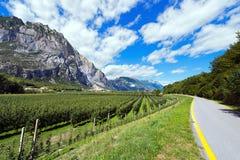 Pista ciclabile in valle di Sarca - Trentino Italia Fotografie Stock