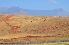 Pista colorida de la erosión Fotografía de archivo libre de regalías
