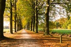 Pista com os troncos de árvore no outono, Países Baixos Fotos de Stock Royalty Free