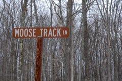 Pista da trilha dos alces em uma floresta imagens de stock royalty free