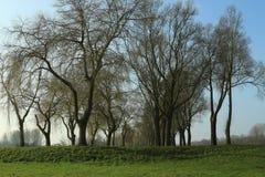Pista das árvores Imagem de Stock