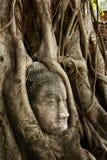 Pista de Buddha Fotos de archivo