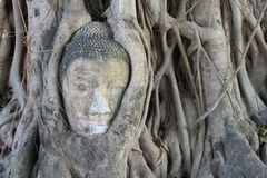 Pista de Buddha dentro de un árbol, Wat Mahatat Imagenes de archivo