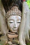 Pista de Buddha en árbol Fotos de archivo libres de regalías
