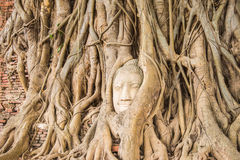 Pista de Buddha en árbol Imágenes de archivo libres de regalías