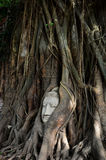 Pista de Buddha en Ayutthaya Imagen de archivo