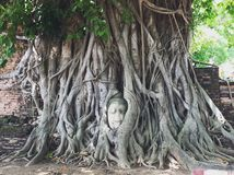 Pista de Buddha en el árbol Foto de archivo
