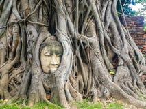 Pista de Buddha en raíces del árbol fotos de archivo