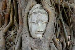 Pista de Buddha en raíces del árbol Imagen de archivo