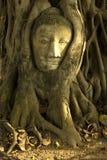 Pista de Buddha en raíces del árbol de banyan Fotografía de archivo
