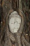 Pista de Budhas apretada por las raíces del árbol Foto de archivo libre de regalías