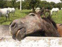 Pista de caballo #1 Foto de archivo libre de regalías