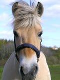 Pista de caballo Foto de archivo libre de regalías