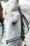 Pista de caballo Imágenes de archivo libres de regalías