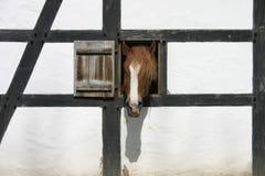 Pista de caballo Foto de archivo