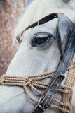 Pista de caballo blanco foto de archivo libre de regalías