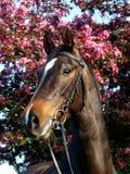 Pista de caballo de bahía tirada en frenillo fotografía de archivo