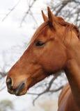 Pista de caballo en perfil Imágenes de archivo libres de regalías
