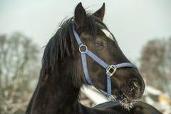 Pista de caballo negra Foto de archivo libre de regalías