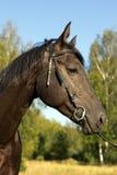Pista de caballo negra en perfil Fotografía de archivo