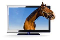 Pista de caballos y 3d TV Imágenes de archivo libres de regalías
