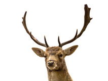 Pista de ciervos en barbecho Foto de archivo libre de regalías
