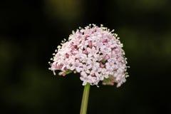 Pista de flor fotos de archivo