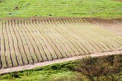 Pista de granja arada fértil fotos de archivo