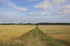 Pista de granja y arbolados Foto de archivo libre de regalías