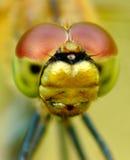 Pista de la libélula Imágenes de archivo libres de regalías
