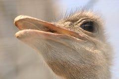 Pista de las aves de corral Imagenes de archivo