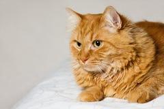 Pista de los gatos Imagen de archivo libre de regalías