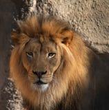 Pista de los leones Fotos de archivo libres de regalías