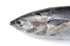 Pista de los pescados de atún Imagen de archivo libre de regalías