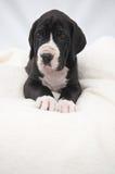 Pista de mentira del blanco del cachorro Fotos de archivo