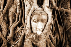 Pista de piedra del budda en las raíces del árbol Fotografía de archivo
