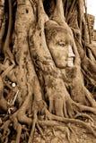 Pista de piedra del budda en las raíces del árbol Imágenes de archivo libres de regalías