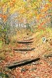 Pista de senderismo Imagen de archivo