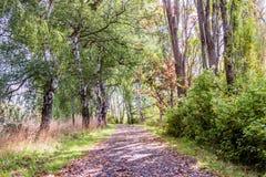 Pista de senderismo cubierta con las hojas caidas en un parque entre los arbustos Fotografía de archivo