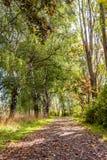 Pista de senderismo cubierta con las hojas caidas en un parque entre los arbustos Foto de archivo libre de regalías