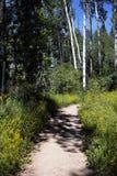 Pista de senderismo de Colorado Imagen de archivo