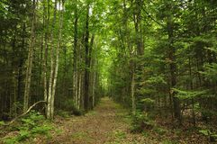 pista de senderismo del bosque fotos de archivo