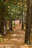 Pista de senderismo del otoño Imagenes de archivo