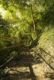 Pista de senderismo del sendero en puesta del sol del bosque y de la luz Fotos de archivo