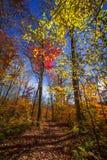 Pista de senderismo en bosque de la caída Foto de archivo