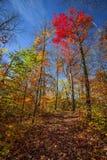 Pista de senderismo en bosque de la caída Foto de archivo libre de regalías