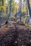 Pista de senderismo en bosque del otoño con los árboles coloridos, las rocas y las hojas caidas Imágenes de archivo libres de regalías