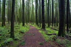 Pista de senderismo en el bosque Fotografía de archivo