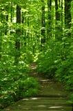 Pista de senderismo en el bosque Foto de archivo libre de regalías