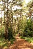 Pista de senderismo en el brezo de Kalmthout, Europa Fotografía de archivo